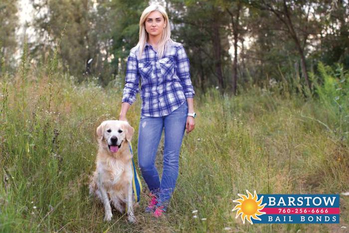 California's Attitude Towards Leashes & Dogs