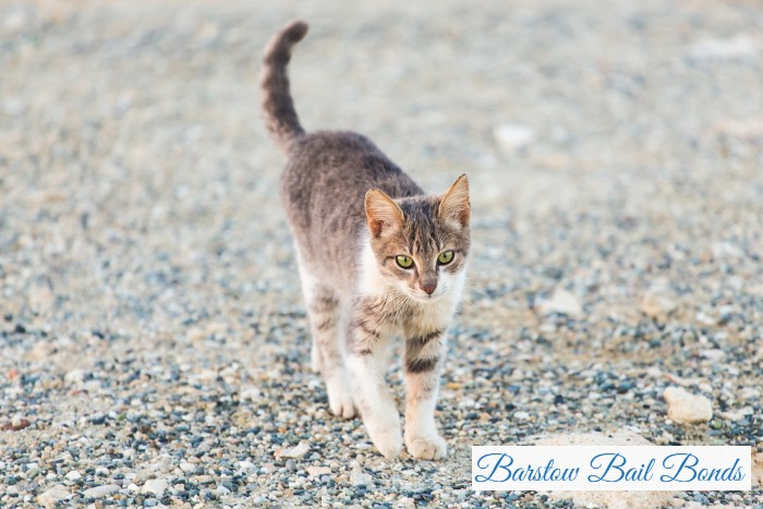 What to Do About Stray Animals